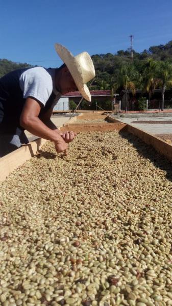 Čerstvě pražená káva